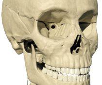 Строение глазницы человека и назначение отдельных ее частей